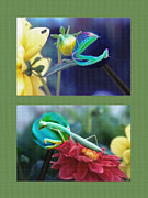 Nature Study Mixed Media - Science Class Diptych 2 - Praying Mantis by Steve Ohlsen