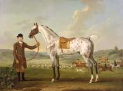 Gray Painting Posters - Scipio - Colonel Roches Spotted Hunter Poster by Thomas Spencer