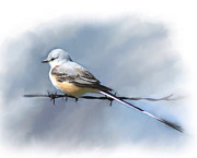 Flycatcher Digital Art - Scissor-tailed Flycatcher by Rosalie Perryman