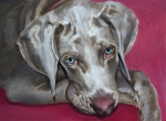 Ethnic Painting Acrylic Prints - Scooby Weimaraner Pet Portrait by Enzie Shahmiri