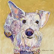 Schnauzer Framed Prints - Scooter Framed Print by Pat Saunders-White