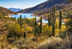 Desert Cactus Prints - Scorpion Cove Print by David Wagner