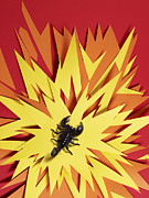 Shock Framed Prints - Scorpion Sitting In The Middle Of An Explosion Framed Print by Michael Blann