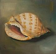 Kristine Kainer Paintings - Scotch Bonnet Seashell by Kristine Kainer