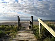 Yvonne Ayoub Art - Scotland Findhorn Boardwalk by Yvonne Ayoub