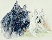 Scottie Paintings - Scottie and Westie by Morgan Fitzsimons