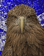 Scottish Digital Art - Scottish Eagle by Wade Aiken