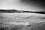 Lowlands Prints - scottish lowlands farmland lothian Scotland Print by Joe Fox