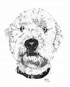 Stippling Framed Prints - Scotts Dog Framed Print by Robert Morin