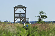 Watch Tower Prints - Scouting for Birds.. Print by Nina Stavlund