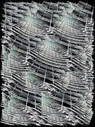 Scraper Print by Tim Allen
