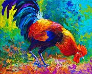 Chickens Paintings - Scratchin - Rooster by Marion Rose