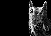 Black And White Photography Metal Prints - Screech Owl Metal Print by Malcolm MacGregor