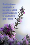 Color Purple Prints - Scripture and Sage Rom. 8 v 1 Print by Linda Phelps
