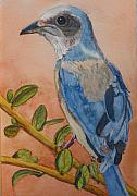 Scrub Jay Paintings - Scrub Jay - Miniature by Libby  Cagle