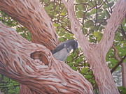 Scrub Jay Paintings - Scrub Jay in the Sycamores by Bonnie Behan