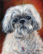 Maltese Dog Posters - Scruffy Dog Poster by Shelley Marler