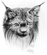 Canadian Art Drawings Drawings Posters - Scruffy Lynx Poster by Bob Patterson