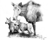 Koala Drawings Posters - Scruffy Moose family Poster by Bob Patterson