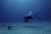 Ocean Floor Posters - Scuba Diver Follows A Stingray Poster by Terry Moore