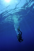 Undersea.  Prints - Scuba diver moving down in the blue water Print by Sami Sarkis