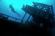 Sami Sarkis - Scuba Diver shining torch by shipwreck