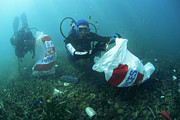 Cleanup Prints - Scuba Divers Collecting Rubbish Print by Alexis Rosenfeld