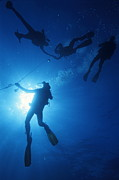 Four People Photos - Scuba Divers silhouettes  by Sami Sarkis