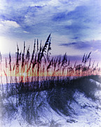 Sea Oats Framed Prints - Se Oats 2 Framed Print by Skip Nall