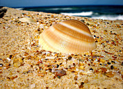 Seashell Photography Framed Prints - Sea beyond the Shell Framed Print by Kaye Menner