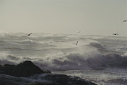 Sea Animals Art - Sea Birds Fly Above Large Waves by Bill Curtsinger