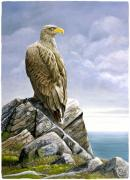Sea Scape Paintings - Sea Eagle by Dag Peterson