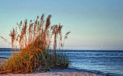Seaside Florida Framed Prints - Sea Grass View Framed Print by Gina Cormier