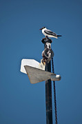Pulley Prints - Sea Gull and Boat Mast Print by Carolyn Marshall