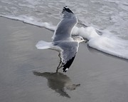 Sea Gull By The Sea Shore Print by Paulette  Thomas