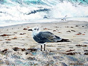 Sea Weed Framed Prints - Sea Gull Dania Beach FL Framed Print by Heather Calderon