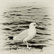Nautical Digital Art - Sea Gull in Sepia by Tony Grider