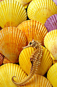 Marine Life Photos - Sea horse and sea shells by Garry Gay