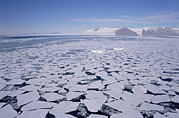 Sea Ice Prints - Sea Ice Break-up, Aerial View Print by Tui De Roy