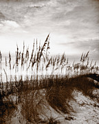 Sea Oats Framed Prints - Sea Oats 1 Framed Print by Skip Nall