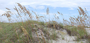 Sea Oats Digital Art Prints - Sea Oats 2 Print by Gordon Mooneyhan