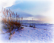 Sea Oats Framed Prints - Sea Oats 3 Framed Print by Skip Nall