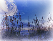 Sea Oats Prints - Sea Oats 4 Print by Skip Nall