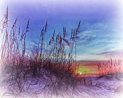 Absence Prints - Sea Oats 5 Print by Skip Nall