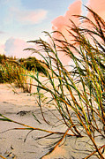 Sea Oats Framed Prints - Sea Oats and Dunes Framed Print by Kristin Elmquist