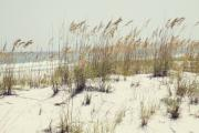Sea Oats Framed Prints - Sea Oats and White Sands Framed Print by Toni Hopper