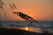 Sea Oats Digital Art Prints - Sea Oats at Sunrise Print by Gordon Mooneyhan
