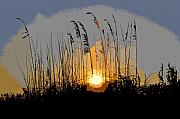 Oats Digital Art Posters - Sea oats at sunset Poster by David Lee Thompson