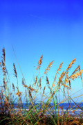 Sea Oats Photo Framed Prints - Sea Oats Atlantic Ocean Framed Print by Thomas R Fletcher
