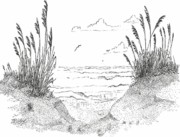 Dunes Drawings Prints - Sea Oats Print by Barney Hedrick
